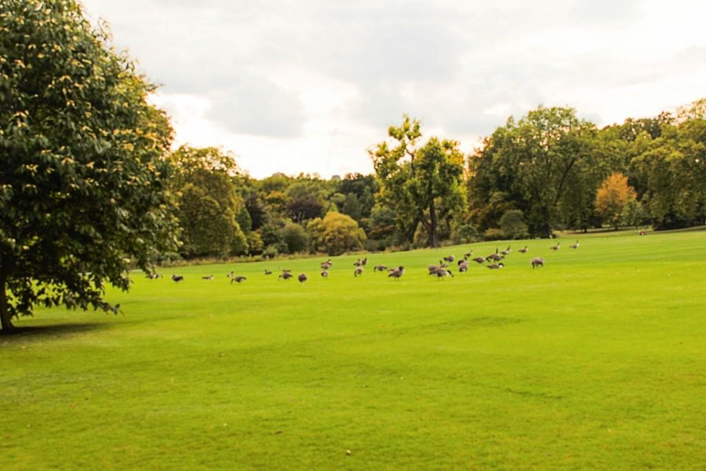 Buckingham Palace Palace Garden