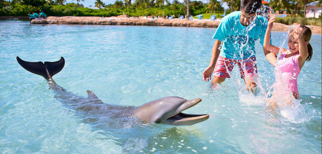Dolphin Cay | Atlantis Resort
